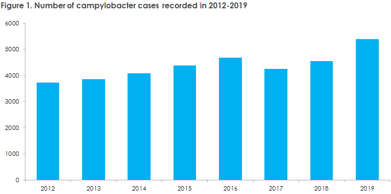 Figure 1. Number of campylobacter cases recorded in 2012-2019