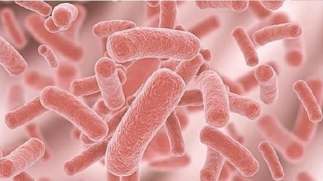 CPO bakterier 02
